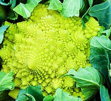 Romanesco broccoli cabbage or Green cauliflower by Stanciuc