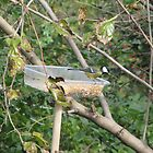 A Great Tit at the Feeding Station by Dennis Melling
