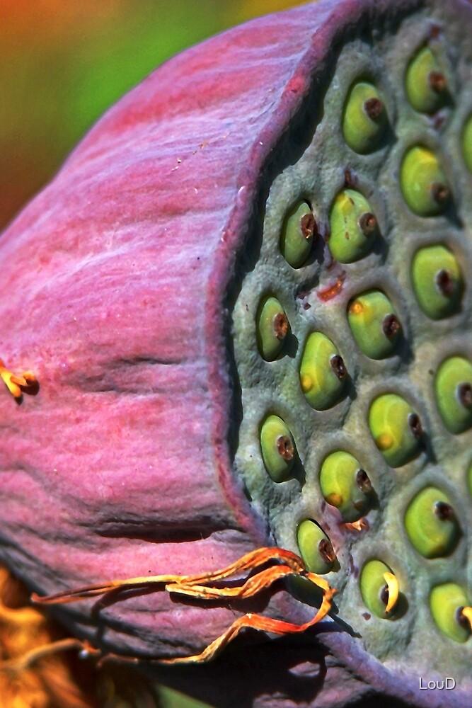 Seed pod by LouD