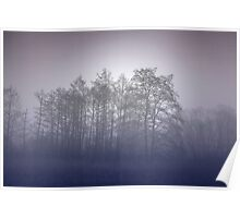 Misty forest with magical and pink glow Poster