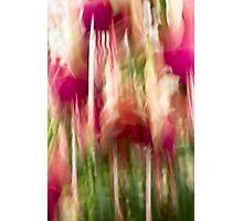 Fuschian bells Photographic Print