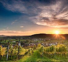 Warm Autumn Sunset on Vineyard by D. & M. Mehl