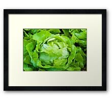 Closeup on fresh wet lettuce in the garden Framed Print