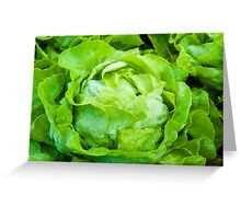 Closeup on fresh wet lettuce in the garden Greeting Card