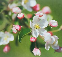 Welcome Springtime by Denise Trocio