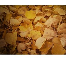 Colorful autumn leaves texture Photographic Print