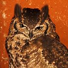 Giant Eagle Owl, Arusha, Tanzania, East Africa  by Carole-Anne