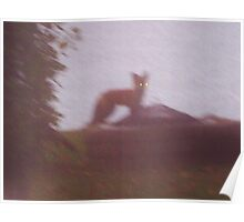 Ghost Fox ~ A Birthday Visitor Poster