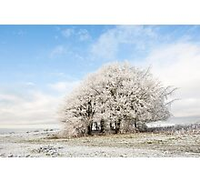 Frosted Copse Photographic Print