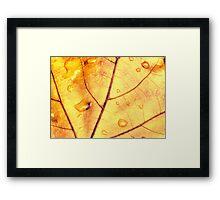 Anatomy of a Leaf Framed Print