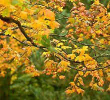 Autumn Trees by Nick Jenkins
