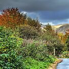 The Devon Way by 242Digital