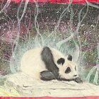 Panda by Troglodyte