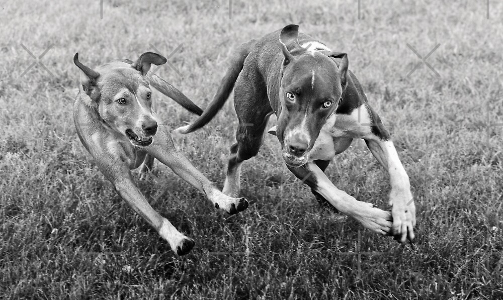 Dogs with game face on .18 by Alex Preiss
