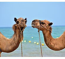 Beach camels Photographic Print