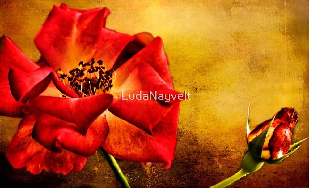 Scarlet Flower by LudaNayvelt