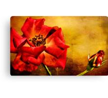 Scarlet Flower Canvas Print