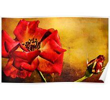 Scarlet Flower Poster