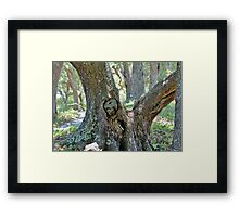Spooky Face In A Tree Framed Print