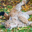Playful Lynx by Dominika Aniola