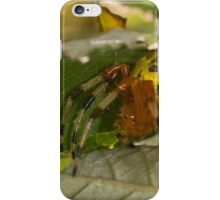 Marbled Orb Weaver iPhone Case/Skin