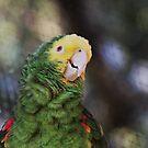 Kellie Bird by Laurie Puglia