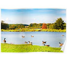 English landscape in autumn with colorful trees and wildlife Poster