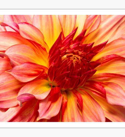 Flower - Dahlia - Natures breath taker Sticker
