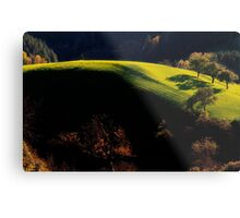 Late Afternoon Light Metal Print