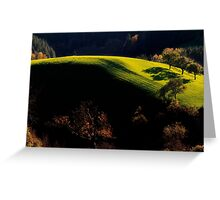 Late Afternoon Light Greeting Card