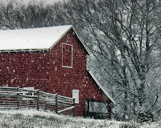 """Barn Bluster""... prints and products by © Bob Hall"