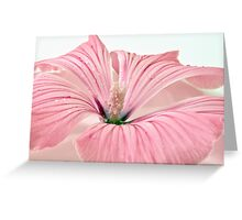 Lavatera Blossom With Rain Drops Greeting Card