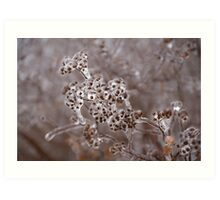 Of Weeds, Seed Pods and Crystals  Art Print