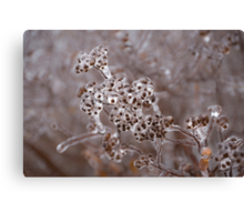 Of Weeds, Seed Pods and Crystals  Canvas Print