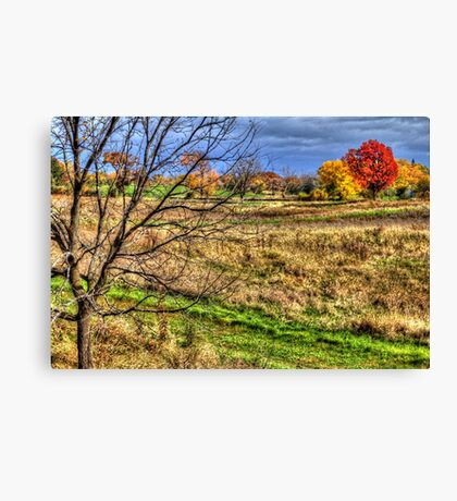 Maple and Oak Fall Colors Canvas Print