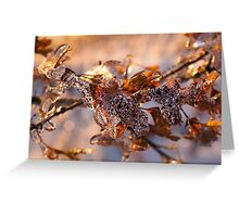 Mother Nature's Christmas Decorations – Oak Leaves Jewelry Greeting Card