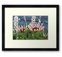Echinacea Blossoms Framed Print
