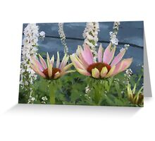Echinacea Blossoms Greeting Card