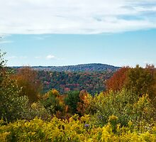 Fall in the Country by Christina Rollo