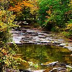 Fall Brook by Christina Rollo