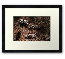 In the Woods 3 Framed Print