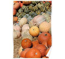 Pumpkins at the Orchard 2 Poster
