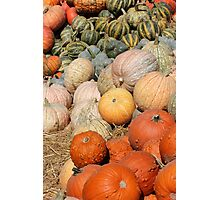 Pumpkins at the Orchard 2 Photographic Print