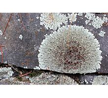 Stone Fence with Lichen Photographic Print