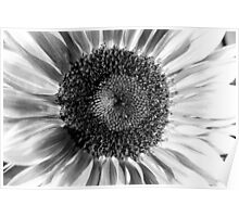 Sunflower 14 BW Poster