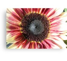 Sunflower 14 Canvas Print