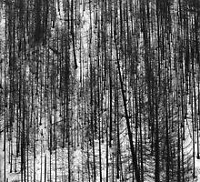 Pine pattern - photograph by Paul Davenport