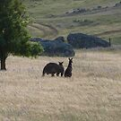 Big Dad & Floe in the paddock, 'Arilka' Adelaide Hills. S.A. by Rita Blom