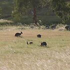 And now there are four! Western Greys, 'Arilka' Adelaide Hills. S.A. by Rita Blom