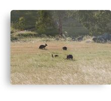 And now there are four! Western Greys, 'Arilka' Adelaide Hills. S.A. Metal Print